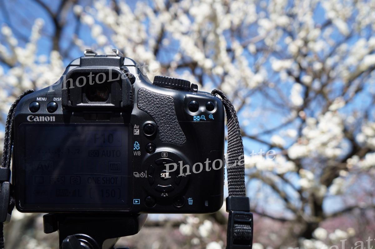 梅まつり撮影